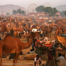 Pushkar fair_1
