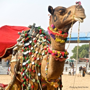 Pushkar fair_8